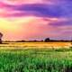 Dusk Color sky with grassy field