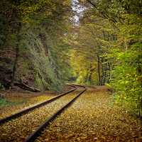 Fall Railroad Tracks and leaves in the forest
