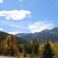 Fall trees and Foliage with mountains landscape