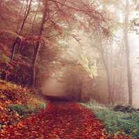 Fog and Mist on the Autumn Path