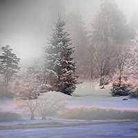 Fog in the snowy forest