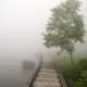 Fog on the water and wooden trail with tree