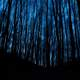 Forest and trees at night in the darkness