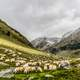 Herd and Pasture with Sheep and mountains landscape
