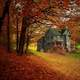 House under Autumn Trees