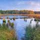 Marsh Landscape with water pools