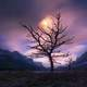 Moon rising on a purple sky