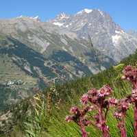 Mountainside landscape with flowers