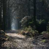Mystical Fairy Walkpath in forest