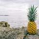 Pineapple by the seaside