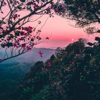 Pink skies with trees and flowers