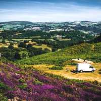 Purple Flowers on the hillside with van