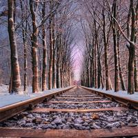 Railroad tracks with a corridor with trees