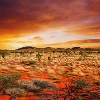 Red Sky and landscape with desert grass and plants