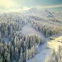 Snowy forest and trees landscape