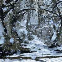 Snowy forest landscape with snow falling