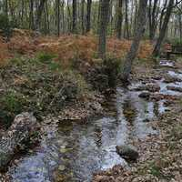 Stream and woods Landscape