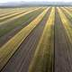 Strip Cropping on a farm
