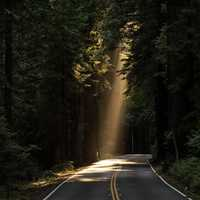 Sunlight and road through the forest