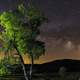 Tree and Starlight landscape night