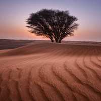 Tree in desert landscape