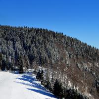 Trees on the snowy hilltop