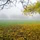 Yellow leaves under the tree during a foggy morning