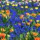 Background of blue, orange, and yellow flowers