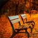 Bench in the Autumn