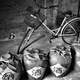 Bike with jugs of wine black and white