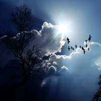 Birds flying in the sky under the clouds and sunlight