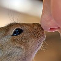 Boy and African Ground Squirrel touching Noses
