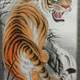 Chinese Style Tiger Drawing