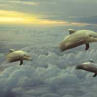 Dolphins jumping in the clouds