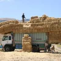 Large Bales of Hay on truck