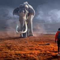 Large Elephant heading towards a backpacker