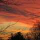 Red Dusk with clouds and branches