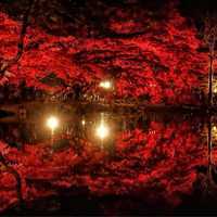 Red trees, lights, and reflection in garden