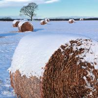 Snow on hay bales
