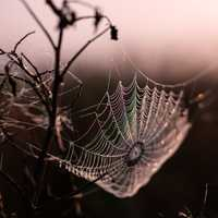 Suspended Spider Web