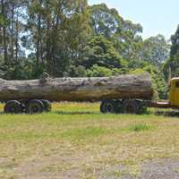 Truck pulling large log in the field