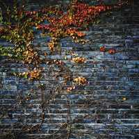 Vines and Leaves Growing on Wall