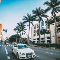 White Audi driving down the road with palm trees