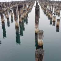 Wood Poles sticking out of the water