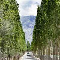 Road with trees on both sides in Pakistan