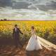 Bride and Groom in the sunflower field