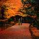Fall Walk in Gardens by Asian Couple