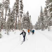 Cross-country skiing North Rim Drive in Yellowstone National Park