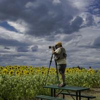 Photographer photographing sunflowers at a sunflower farm