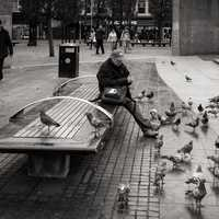 The Pigeon Whisperer feeding birds